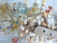 beach seashells photo  http://www.etsy.com/shop/beachcomberhome?ref=pr_shop_more