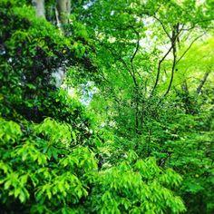 もう初夏ですねー木々が濃い緑になってきて鳥や草木の声も耳触りよく聞こえてきました暑いのと虫は苦手ですが緑は大好きです
