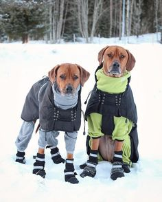 You could call these two 'hot dogs' - they certainly won't get cold dressed like that!!...very cute:):):)