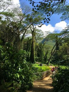 Path to Manoa Falls, #Oahu. #Hawaii.