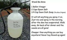 Got Weeds? Here's a simple, DIY Weed Killer Recipe, you can use plain salt in place of the Epsom salts if you prefer. http://www.budget101.com/frugal/household-tips-n-tricks-204/