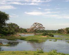 Ruaha National Park, Tanzania: Pristine beautiful park (blooming expensive)