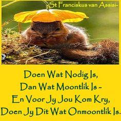 Kwazulu Natal, Afrikaans, Tart, Religion, Twitter, Nature, Beautiful, Naturaleza, Pie