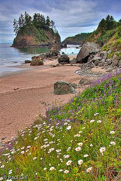 Wildflowers and Sea stacks at Trinidad State Beach. paulgillphoto.com © All Rights Reserved. California