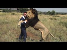 Kevin Richardson playing Football with Lions - YouTube - Kevin is truly amazing