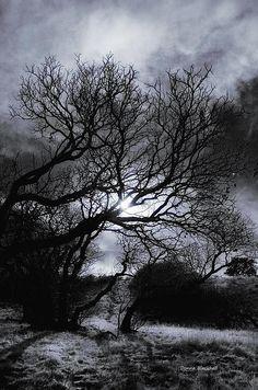 """Ichabod's Pathway"" landscape photography by Donna Blackhall"