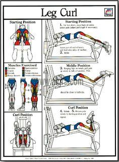 foam roller leg exercises pdf