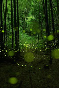photographer Yume Cyan has been shooting some magical long exposure photographs of fireflies in a forested area around Nagoya City, Japan. By keeping the camera's shutter open at a low aperture Cyan. Nagoya, Exposure Photography, Photography Backdrops, Photography Uk, Photography Tutorials, Kate Green, Long Exposure Photos, Forest Light, Magical Forest