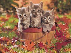 Pieski, psy, pieseczki, koteczki, kotki koty...