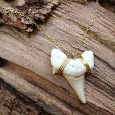 Shark Tooth and 14k Gold Necklace., via Etsy.