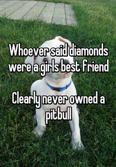 Whoever said diamonds were a girls best friend Clearly never owned a pitbull
