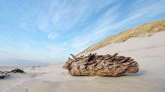 Beach @ Terschelling