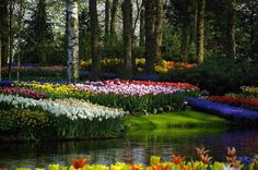 METRONOME: Keukenhof : the most beautiful flower garden
