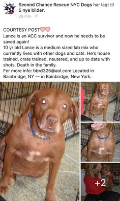 10/14/16 COURTESY POST FOR NYC ACC SURVIVOR LANCE DUE TO DEARH IN FAMILY!! PLEASE SHARE TO SAVE HIM AGAIN! /ij🐾🐾 https://m.facebook.com/story.php?story_fbid=1037450953030626&id=268612969914432&__tn__=%2As