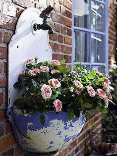 Bica antiga como vaso para plantas.