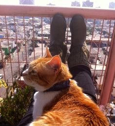 Mi tierno Donatello tomando sol conmigo. Octubre 2013 en primavera.