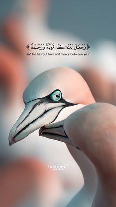 Best Islamic Quotes, Quran Quotes Inspirational, Muslim Love Quotes, Arabic Love Quotes, Imam Ali Quotes, Allah Quotes, Muslim Images, Beautiful Quran Quotes, Coran Islam
