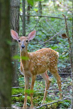 .http://www.pinterest.com/elspiekaar/forest-and-wildlife/