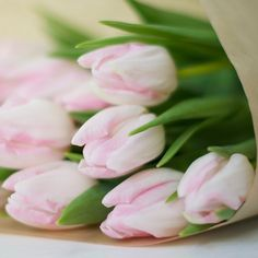 { Tulips }