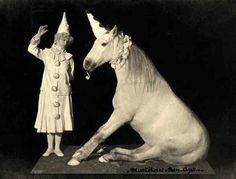 Unicorn Show