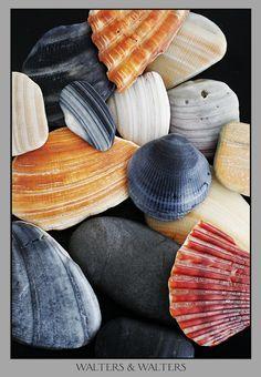 shells  #seashells