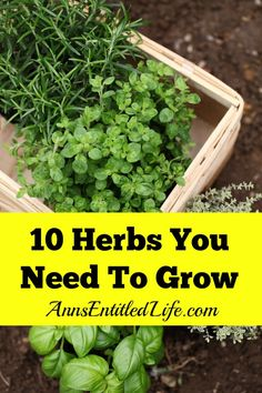 10 Herbs You Need to Grow #garden #herbs #dan330 http://livedan330.com/2015/04/22/10-herbs-you-need-to-grow/