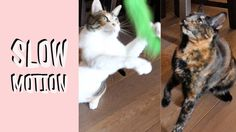 Funny Cats Vlog 44 - Yuki & Quirky in Slow Motion