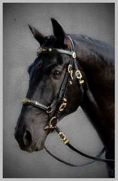 de cheval Combining Dressage with Clicker Training — Euclides Bridle Most Beautiful Horses, Pretty Horses, Horse Love, Animals Beautiful, Dog Clicker Training, Dog Training, Friesian Horse, Andalusian Horse, Arabian Horses