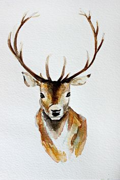 Buck watercolor Art Print in several sizes $18 to $33.