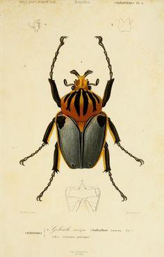Atlas: v. 2, Ed. 2 - Zoologie (Reptiles & Poissons articules) - Dictionnaire universel d'histoire naturelle résumant et complétant tous les faits présentés par les encyclopédies,... / - Biodiversity Heritage Library