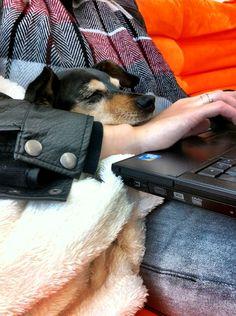 Sydney sleeping next to her guardian, Jessy, at work