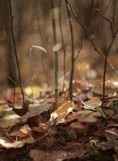 Mushroom vk.com/konstantinchernov
