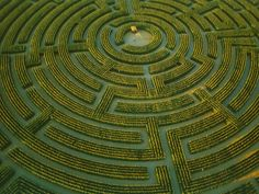 The largest plant maze in the world at Reignac-sur-Indre