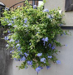Bunch Of Flowers, Green Flowers, Green Plants, Home Garden Design, Home And Garden, Garden Paths, Garden Landscaping, Bonsai, Fence Plants