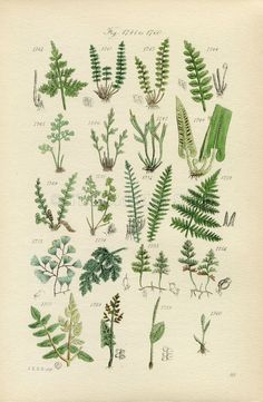 Antique Botanical Print of Wild Flowers 1914 John by TheOldMapShop, $20.00