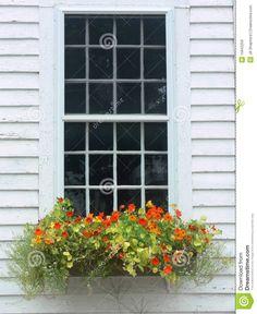nasturtium in window box - Bing Images