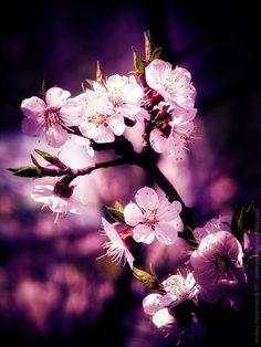Spring by Andrey Ospishchev, via 500px