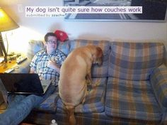 My dog isn't quite sure how couches work.