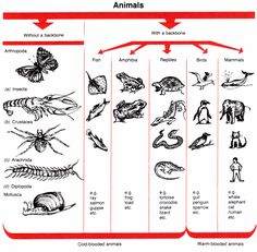 Animal Classification Chart Vertebrates - Don't let any more opportunities go by in capturing the knowledge of your aging family generations, capture it and get it online with our help Grade 3 Science, Science Lessons, Science Education, Science For Kids, Science Activities, Science And Nature, Kids Education, Life Science, Vertebrates And Invertebrates