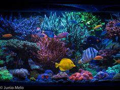 A very nice saltwater aquarium Saltwater Aquarium Fish, Saltwater Tank, Reef Aquarium, Reef Tanks, Fish Tanks, Underwater World, Salt And Water, Corals, Ocean Life