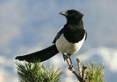 6월 새벽아침 까치 새소리(Magpie bird's song), 연희동에서~ https://youtu.be/6AExtnsQZos
