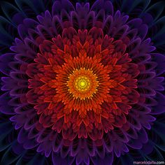 Cosmic Flower by Marcelo Dalla