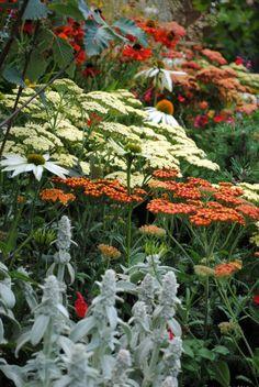 White echinacea, yarrow and lamb's ear....pretty plant combination