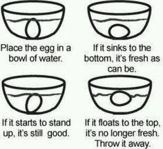 Egg Freshness