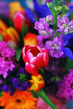 LOVE these bold vibrant colors! I wld make this into a bouquet for a winter wedding for bridesmaids in dark dresses