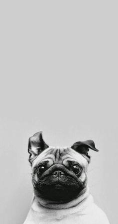 Image de dog, cute, and pug @louxse