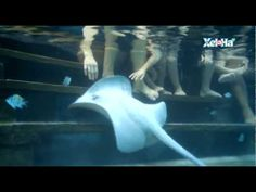 Stingray Encounter Xel-Há Mexico. #Nature #Underwater #Activities #Animals