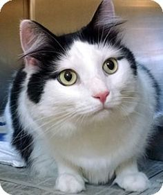 Duke-adopted!!!   Delran Petsmart.  Rescued from BCAS.