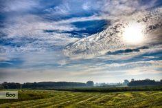 Fields ans sky by Corina Ene