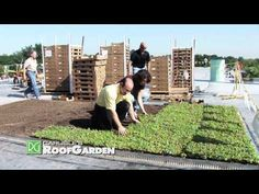 News Flash: Carlisle's Roof Garden - YouTube